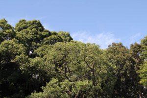 「自然再生」世界と日本の差…「持続可能な社会へ」若者たちがすべきこと