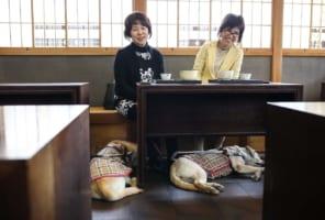 盲導犬を理由に「入店拒否」が6割以上 店の主張「犬が苦手」「前例がない」「トラブルがあった」